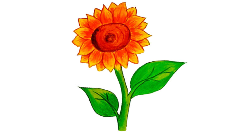 How to draw a sunflower 2021
