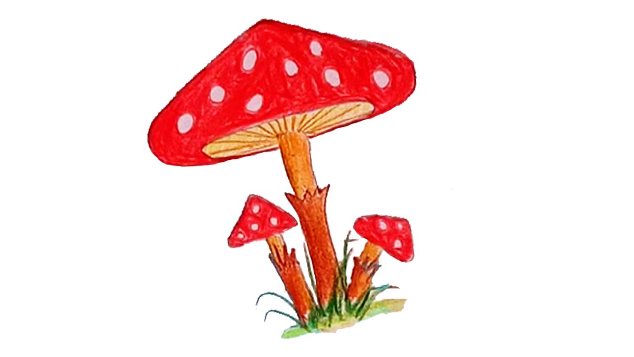 How to Draw a Mushroom Step by Step   10   Only Drawing